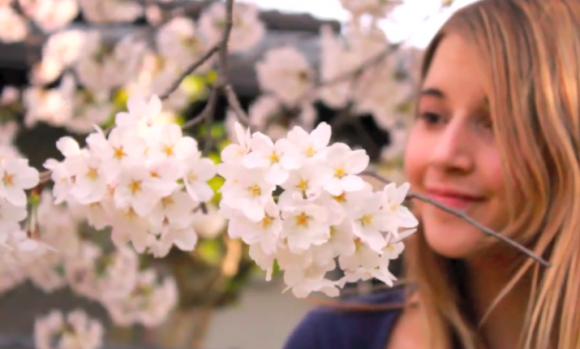 There's something about sakura- It's hard not to fall in love with Japan's cherry blossom【Videos】