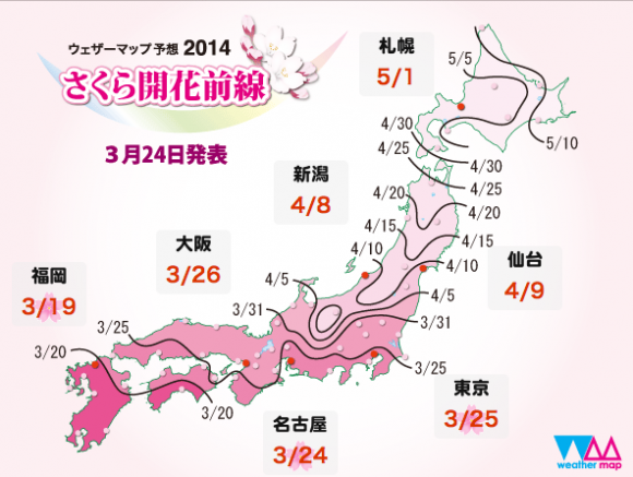 There's something about sakura- It's hard not to fall in love with Japan's cherry blossom【Videos】3